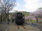 Sakura2010h