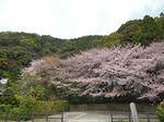 Sakura2010q
