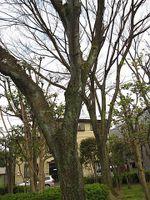 Sakura2010w